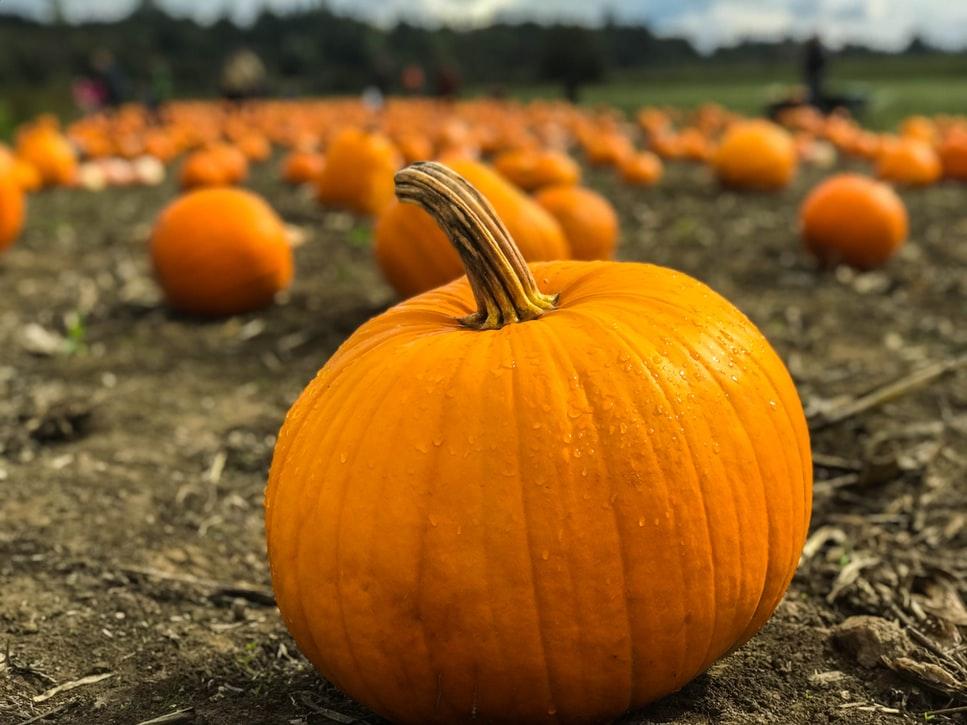 pumpkin soup recipe | elika tasker